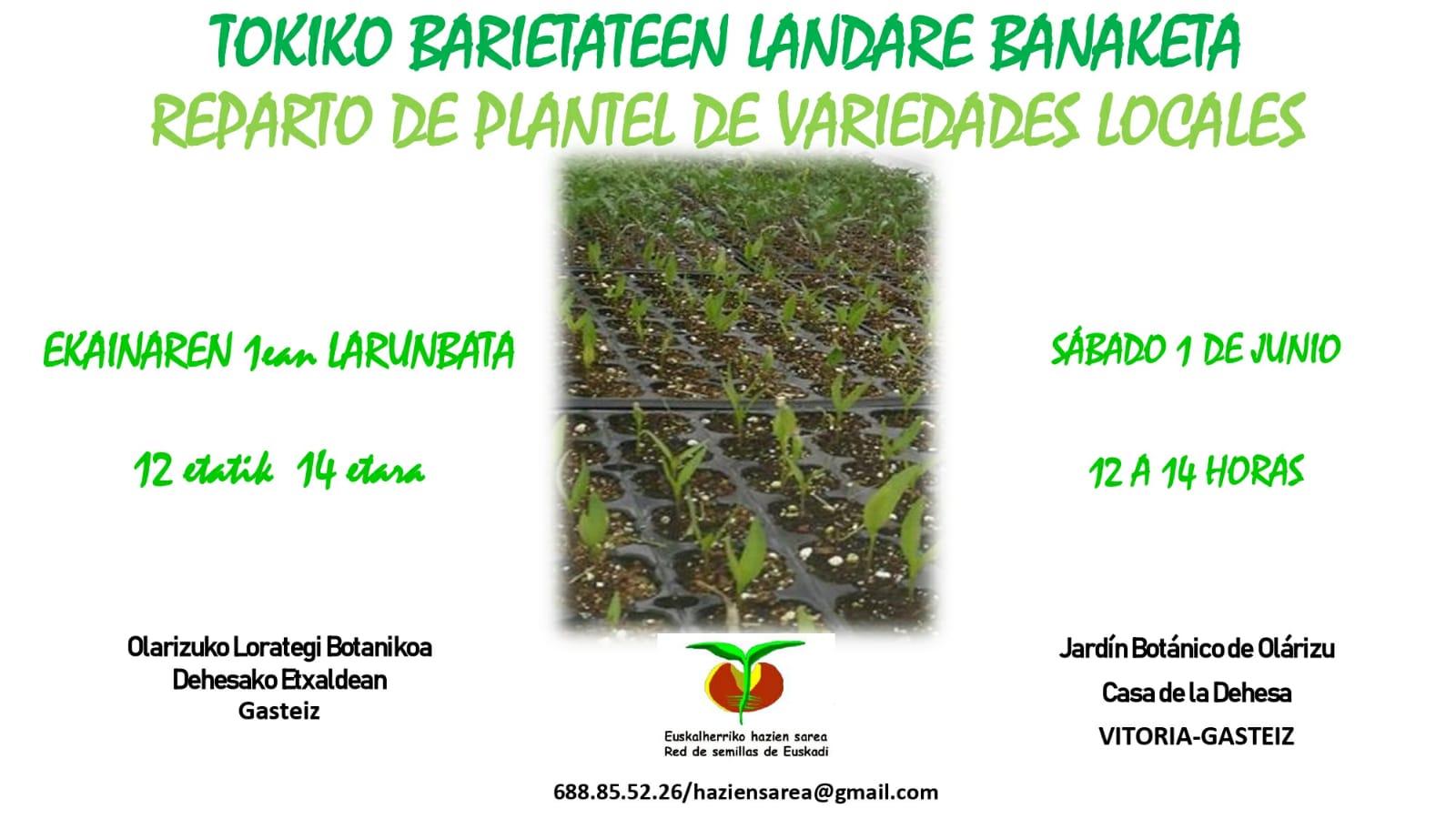 Reparto Planteles variedades locales